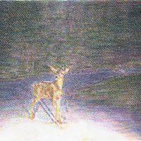 Deer-in-the-headlights1